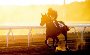 Thoroughbred racing horse on track in the sunrise