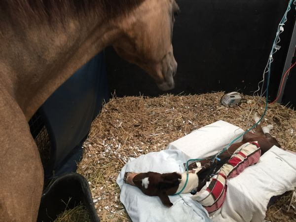 Image for Dummy Foal Treatment