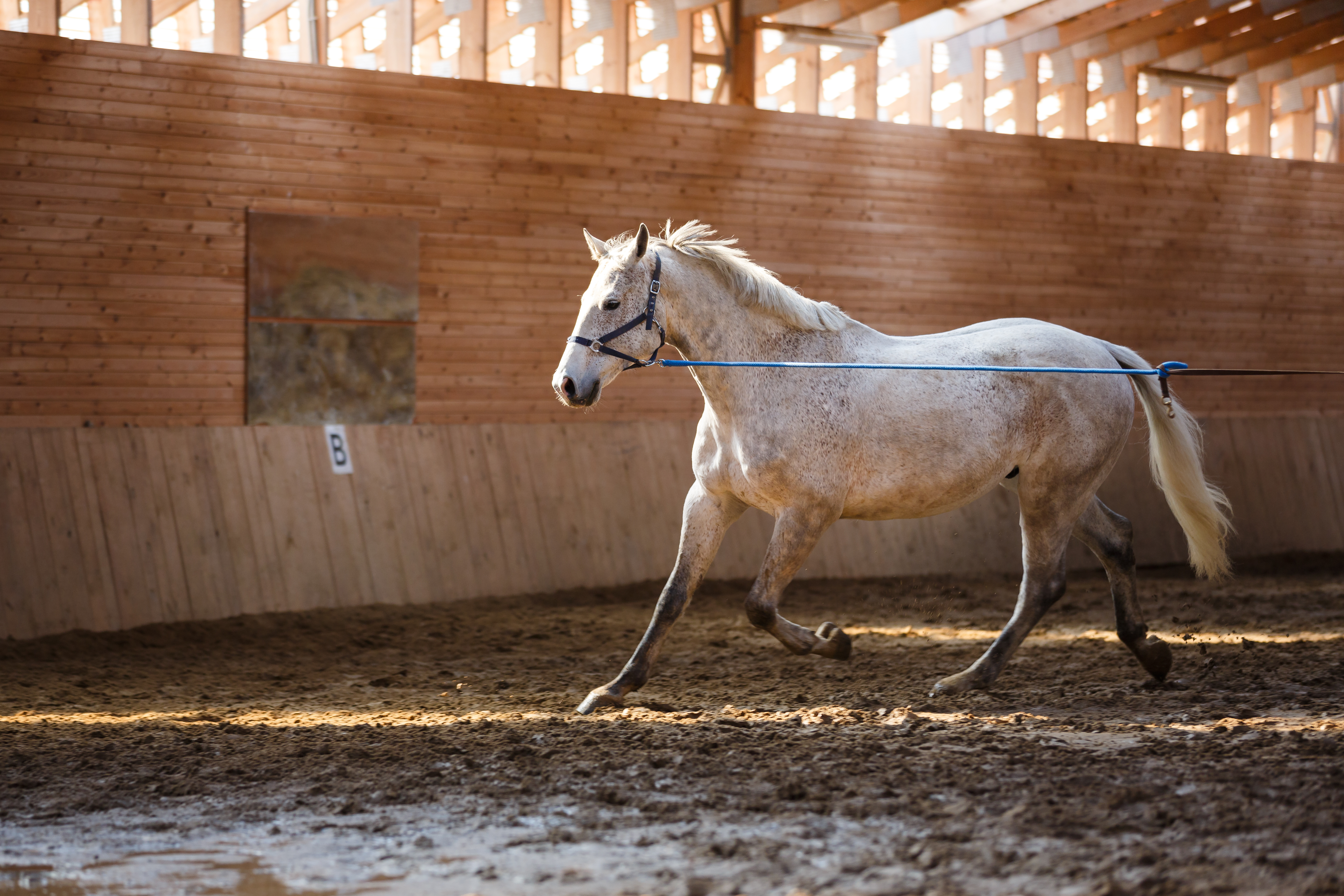 Horse being exercised