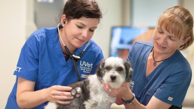 Veterinarian with listening to dog with stethoscope