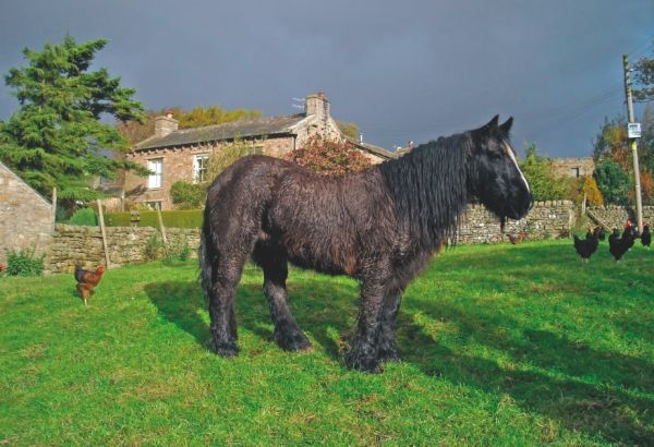 Pony in front of a cottage with long curly black hair