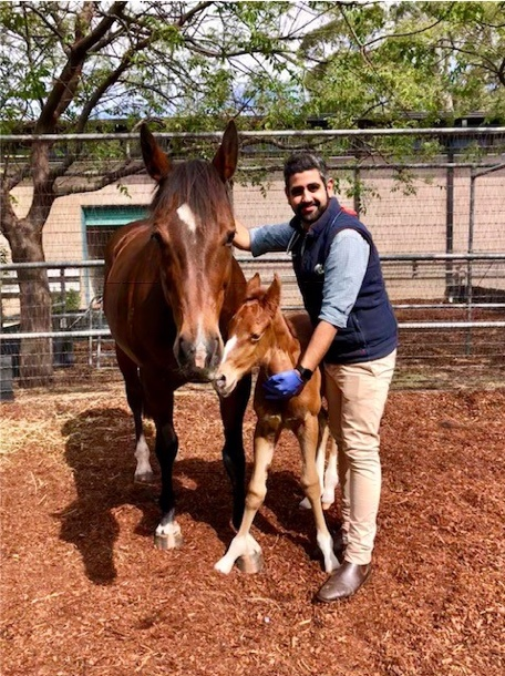 Veterinarian Dr Adeel Khan standing with mare and her foal