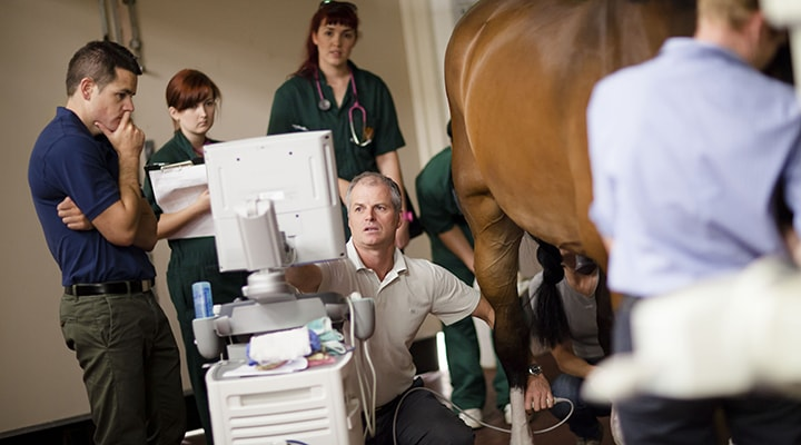 Image for The Role of Veterinary Specialists and Referral Equine Hospitals